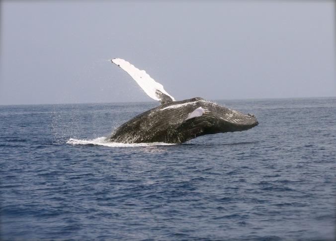 whale-2678819_1280